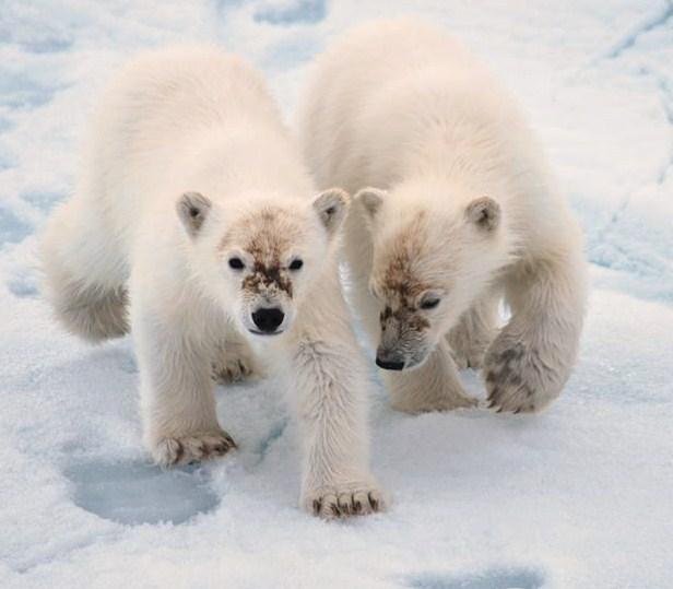uffes fina björnungar 2